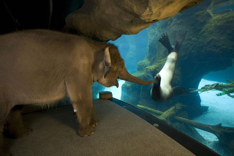 an elephant meets a sea lion The Top 100 Pictures of the Day for 2012