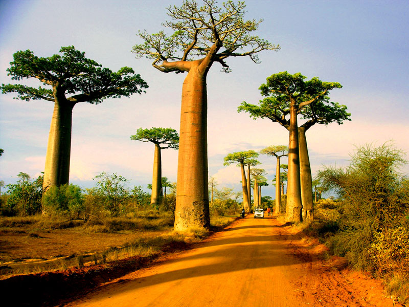 avenue of the baobabs morondova madagascar Picture of the Day: Avenue of the Baobabs