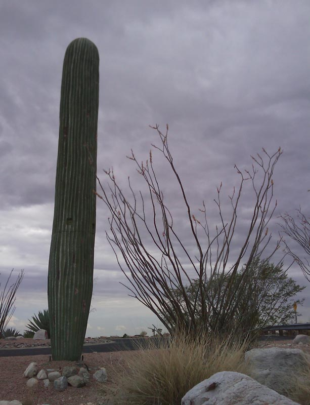 cell phone tower disguised as a cactus 2 25 Cell Phone Towers Disguised to Look Like Something Else