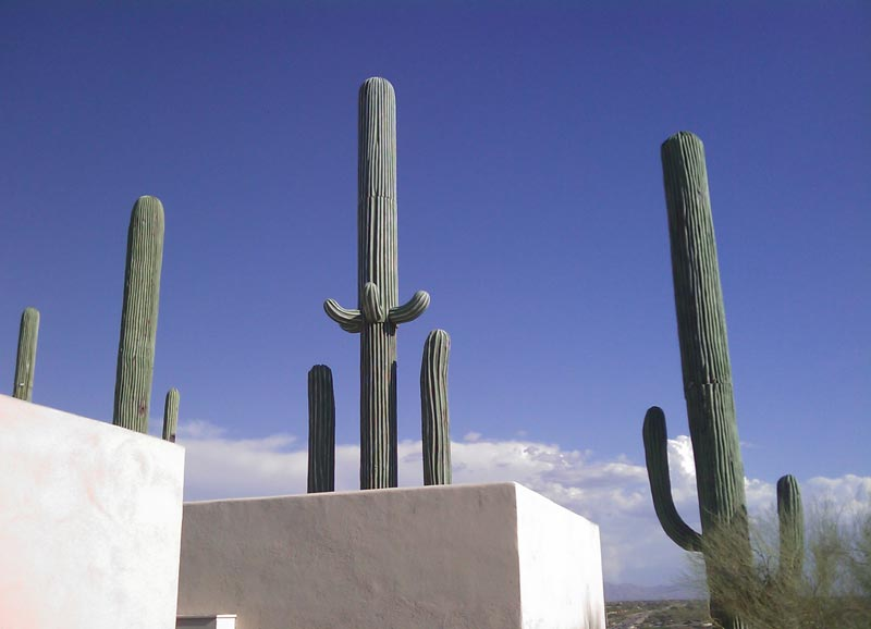 cell phone tower disguised as a cactus 3 25 Cell Phone Towers Disguised to Look Like Something Else