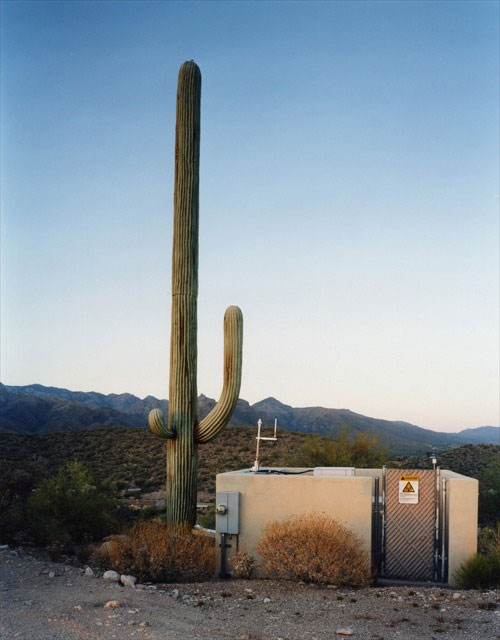 cell phone tower disguised as a cactus 4 25 Cell Phone Towers Disguised to Look Like Something Else