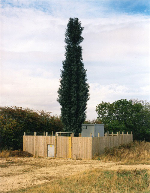 cell phone tower disguised as a tree 2 25 Cell Phone Towers Disguised to Look Like Something Else