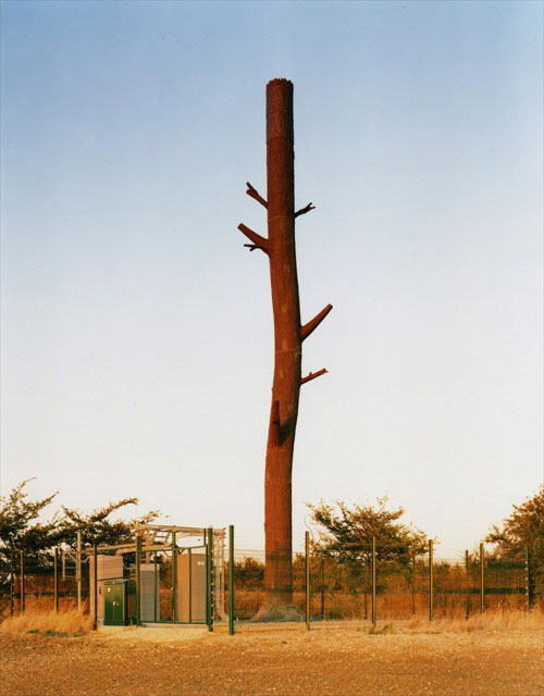 cell phone tower tree trunk 25 Cell Phone Towers Disguised to Look Like Something Else