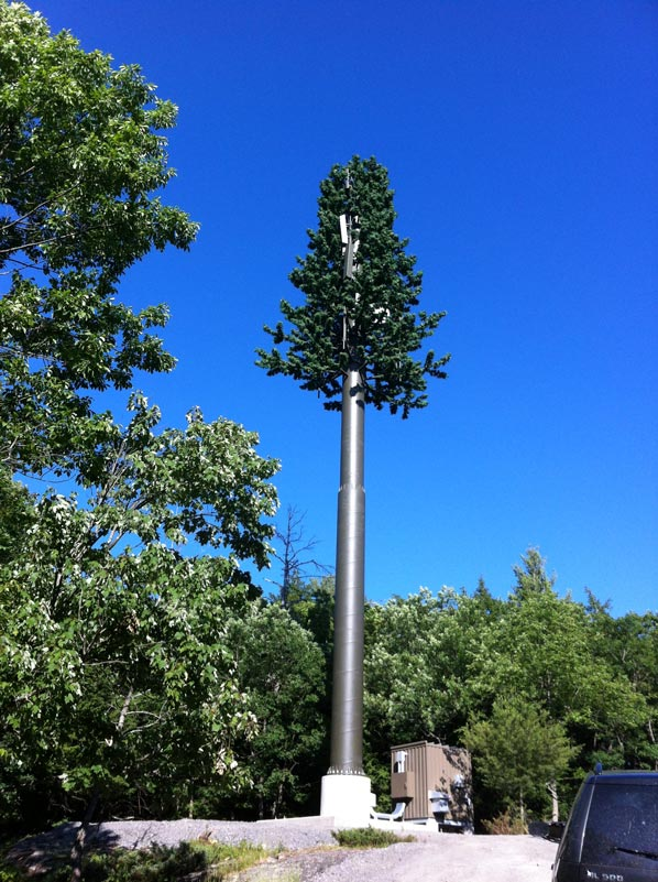 cell phone tree 25 Cell Phone Towers Disguised to Look Like Something Else