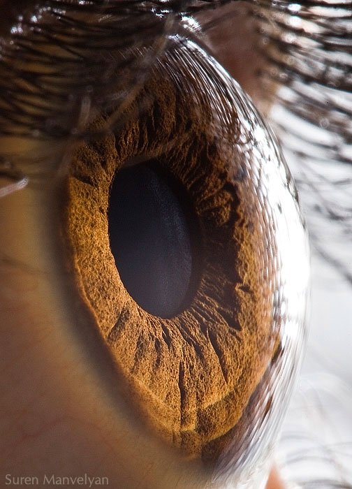 extreme close up of human eye macro suren manvelyan 1 21 Extreme Close Ups of the Human Eye
