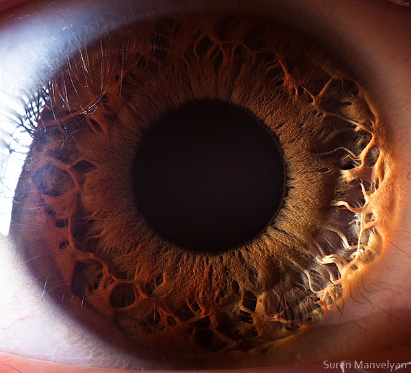 extreme close up of human eye macro suren manvelyan 11 21 Extreme Close Ups of the Human Eye