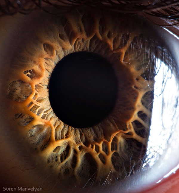 extreme close up of human eye macro suren manvelyan 15 21 Extreme Close Ups of the Human Eye