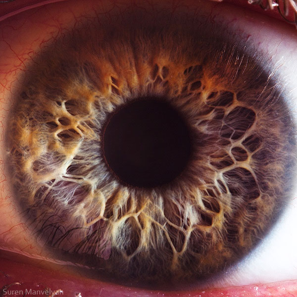 New Macro images of Eyes Wide Open from CaryNewmanProductions ...