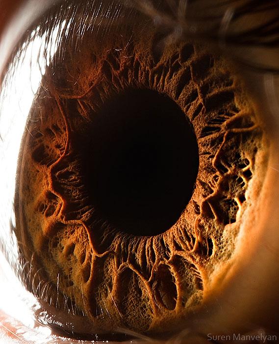 extreme close up of human eye macro suren manvelyan 17 10 Amazing Close Ups Show No Two Snowflakes are Alike