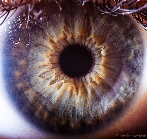 extreme close up of human eye macro suren manvelyan 18 21 Extreme Close Ups of the Human Eye