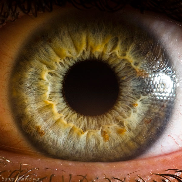 extreme close up of human eye macro suren manvelyan 2 21 Extreme Close Ups of the Human Eye