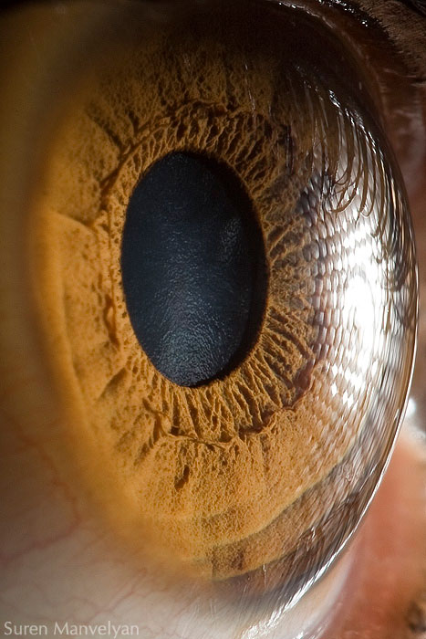 extreme close up of human eye macro suren manvelyan 3 21 Extreme Close Ups of the Human Eye