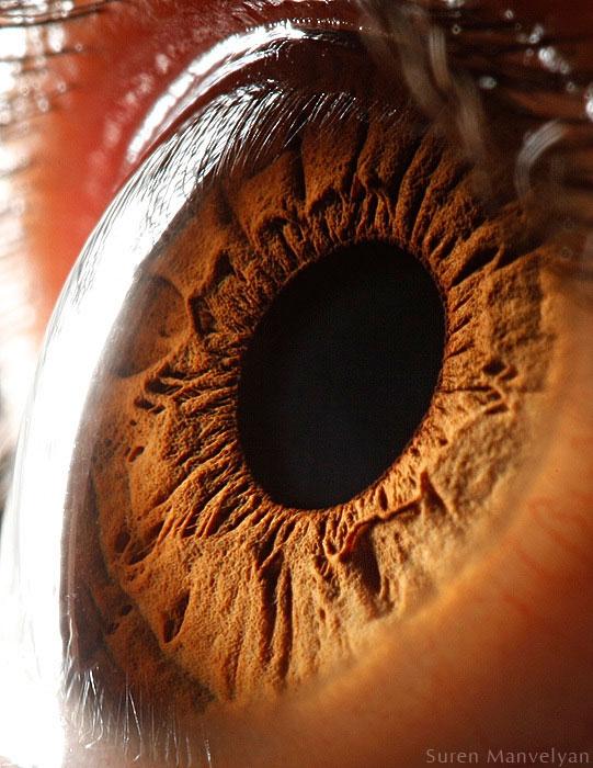 extreme close up of human eye macro suren manvelyan 5 21 Extreme Close Ups of the Human Eye