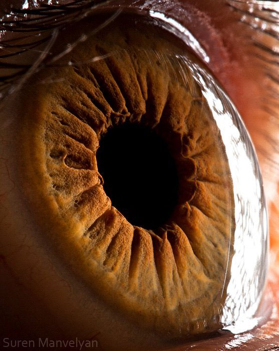 extreme close up of human eye macro suren manvelyan 7 21 Extreme Close Ups of the Human Eye