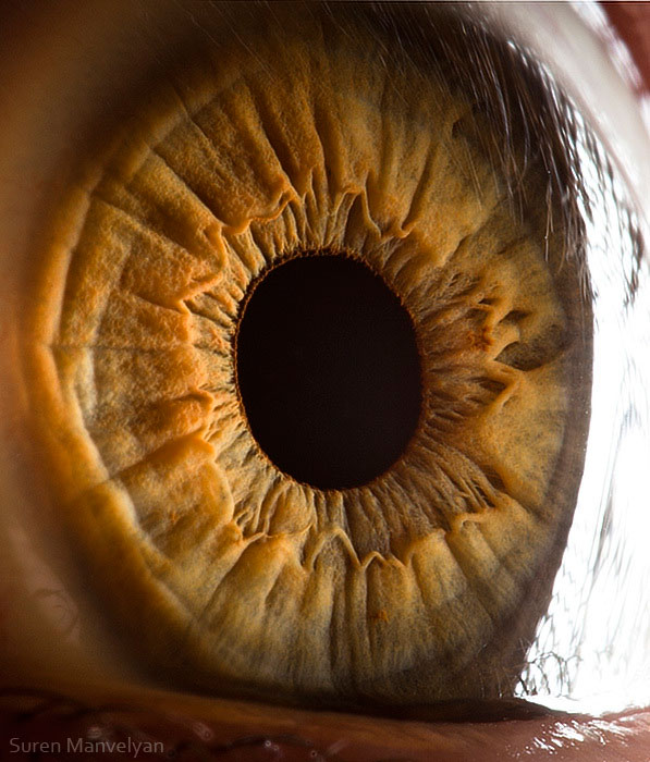 extreme close up of human eye macro suren manvelyan 9 21 Extreme Close Ups of the Human Eye