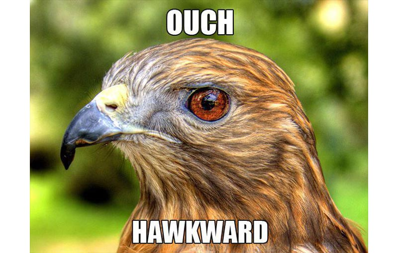 hawkward 15 Ways to Get Past an Awkward Moment