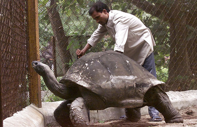 adwaita aldabra tortoise oldest in the world 10 Animals that Lived Longer than the Oldest Known Human
