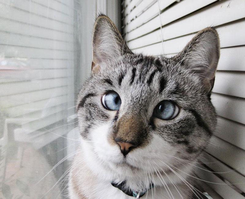 Cat Is Cross Eyed