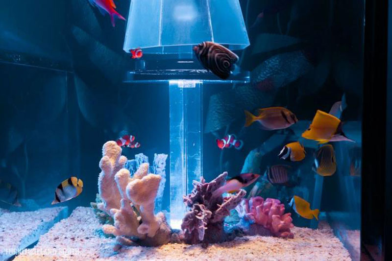 cool custom fish tank headboard for your bed 171twistedsifter
