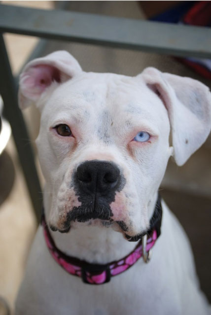 20 Animals With Two Different Colored Eyes 171 Twistedsifter