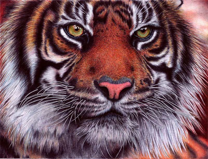 tiger   bic ballpoint pen by vianaarts Hyperrealistic Portraits Using Only Ballpoint Pens
