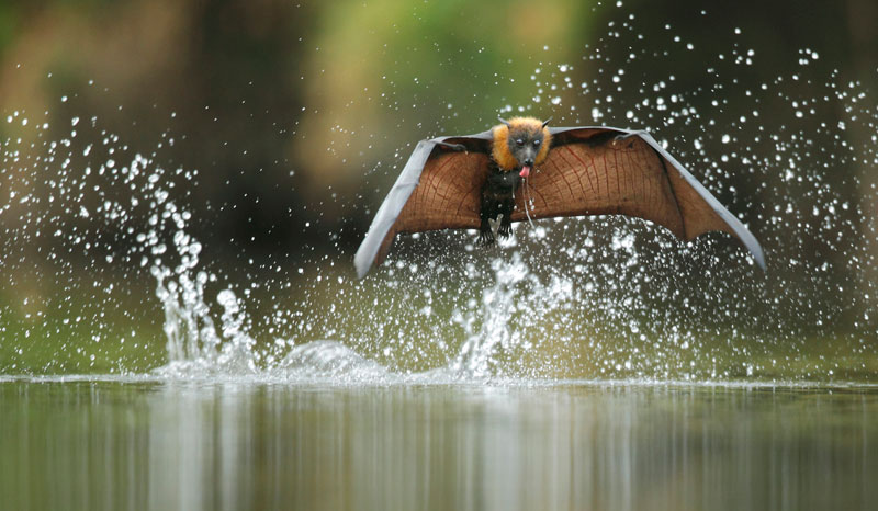021 ofer levy israel australia fly by drinking Highlights from the 2012 Wildlife Photographer of the Year