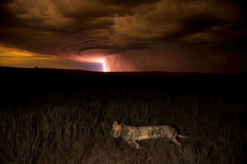 Highlights from the 2012 Wildlife Photographer of the Year