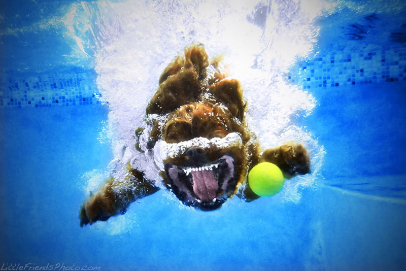 10 Hilarious Portraits of Dogs Underwater
