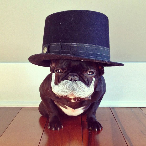 french bulldog dress up in costume instagram trotter 1 The Most Adorable French Bulldog on Instagram