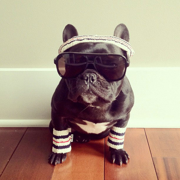 french bulldog dress up in costume instagram trotter 2 The Most Adorable French Bulldog on Instagram