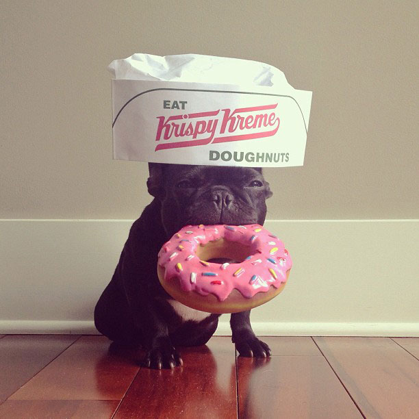 french bulldog dress up in costume instagram trotter 3 The Most Adorable French Bulldog on Instagram