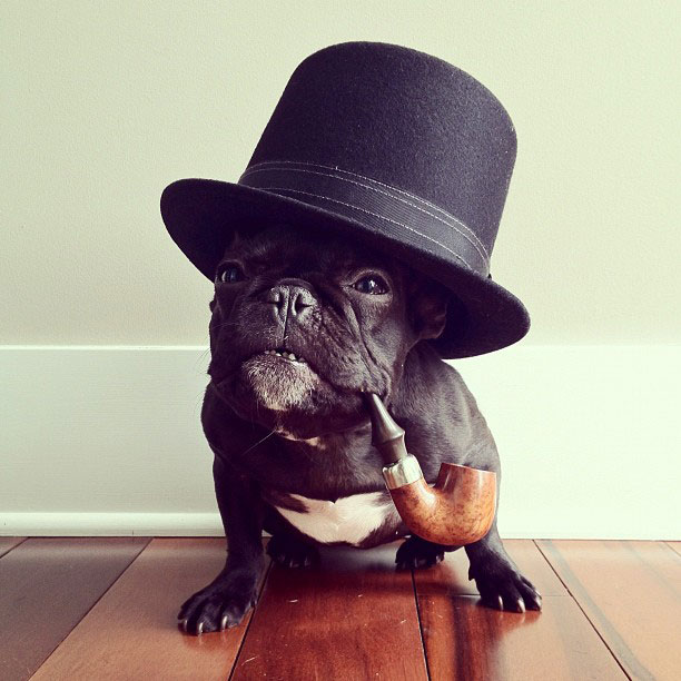 french bulldog dress up in costume instagram trotter 5 The iPhone Photography of Brock Davis