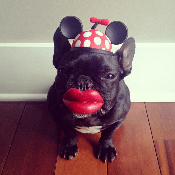 french bulldog dress up in costume instagram trotter 6 The Most Adorable French Bulldog on Instagram