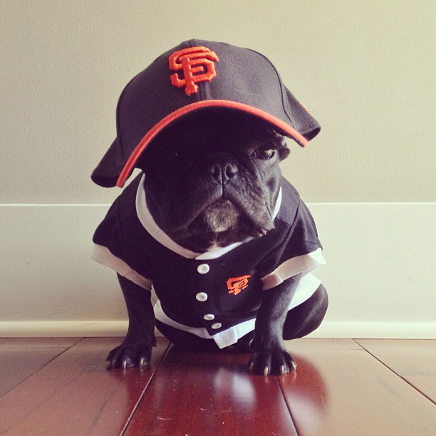french bulldog dress up in costume instagram trotter 7 The Most Adorable French Bulldog on Instagram
