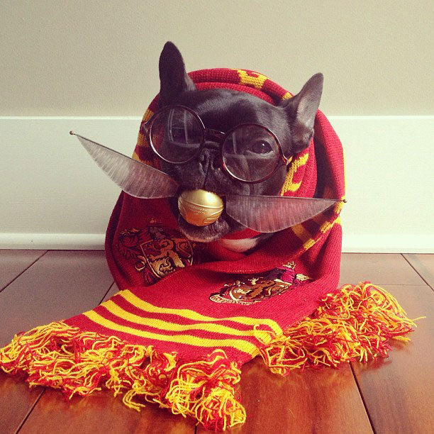 french bulldog dress up in costume instagram trotter 8 The Most Adorable French Bulldog on Instagram