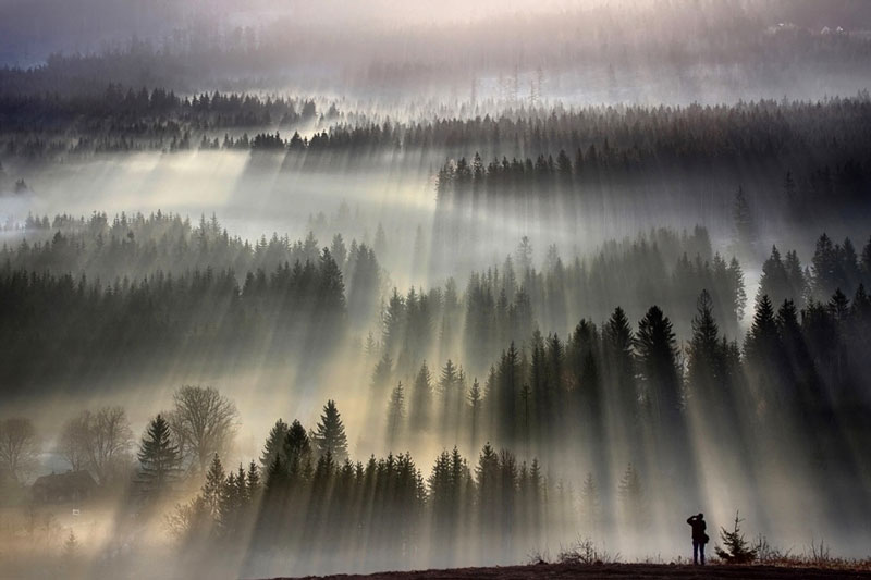 landscapes trees fog - photo #9