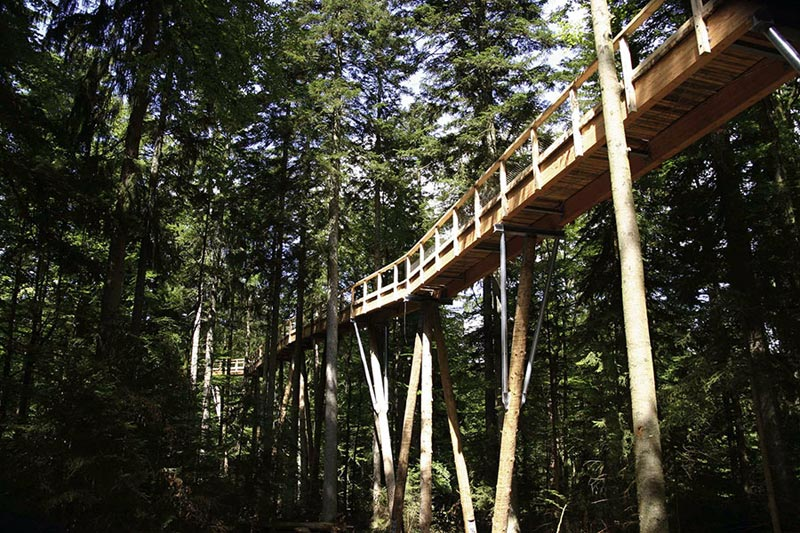 worlds longest tree top walk bavarian forest national park baumwipfelpfad 11 The Longest Tree Top Walk in the World
