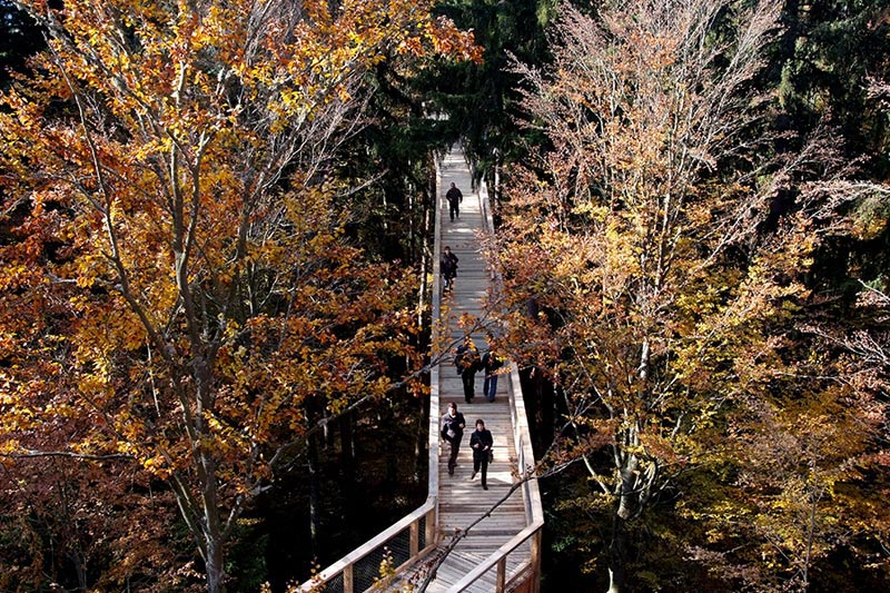 worlds longest tree top walk bavarian forest national park baumwipfelpfad 15 The Longest Tree Top Walk in the World