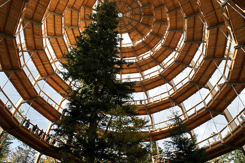 worlds longest tree top walk bavarian forest national park baumwipfelpfad 18 The Longest Tree Top Walk in the World