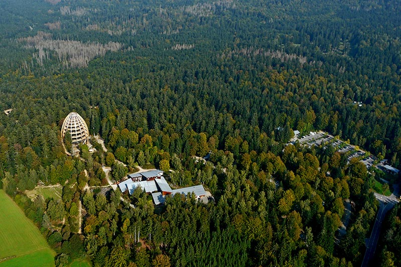 worlds longest tree top walk bavarian forest national park baumwipfelpfad 8 The Longest Tree Top Walk in the World