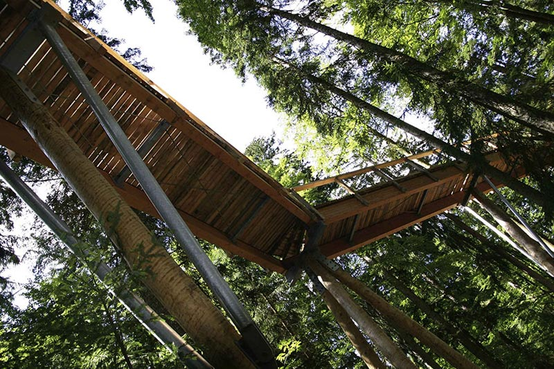 worlds longest tree top walk bavarian forest national park baumwipfelpfad 9 The Longest Tree Top Walk in the World