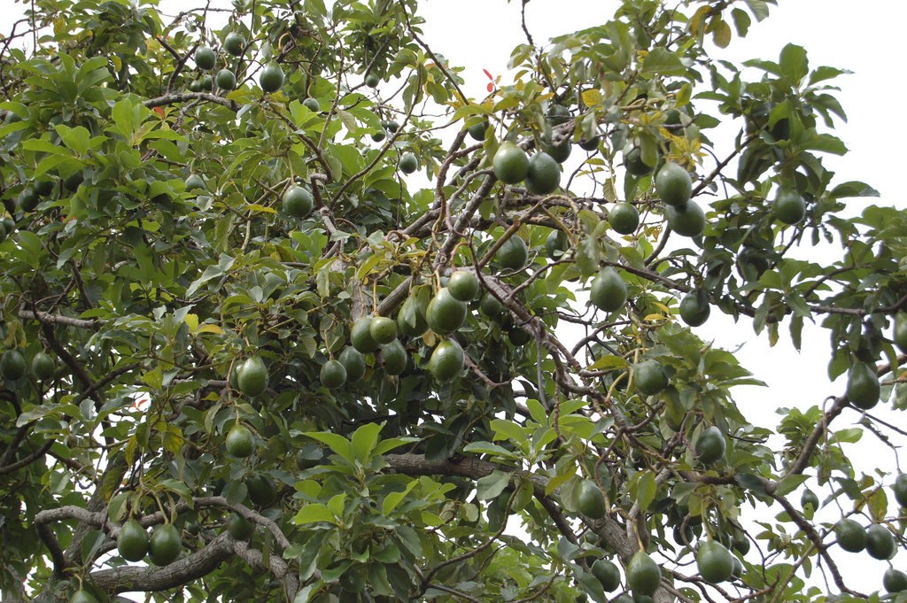 o lovely  fruits and their plants  trees