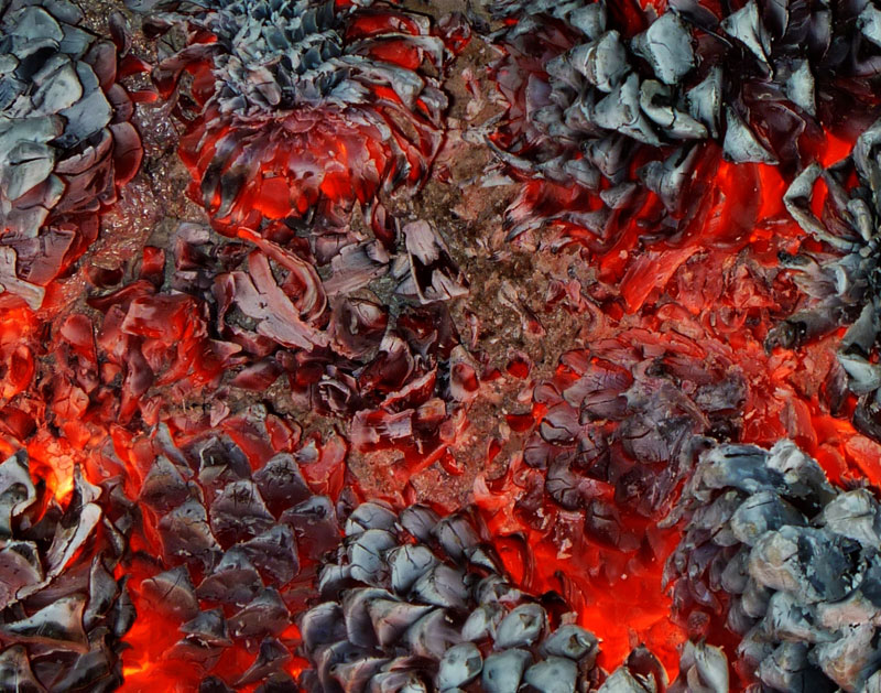 Picture of the Day: Pine Cones Burning in aFire