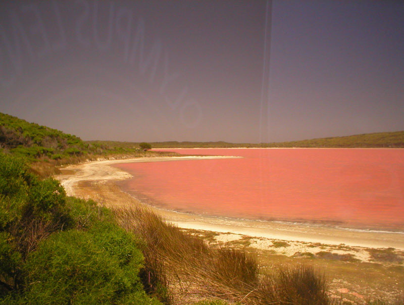 Orange Australia  City new picture : Lake Hillier: The Pink Lake in Australia «TwistedSifter