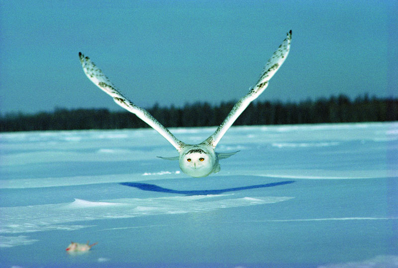 Picture of the Day: Owl GetYou