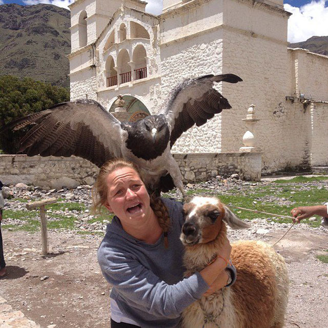 falcon photobombs woman with llama The Shirk Report   Volume 199