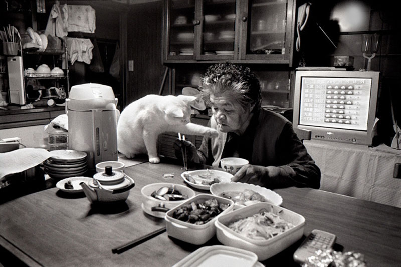 japonés abuela y su gato miyoko ihara (13)