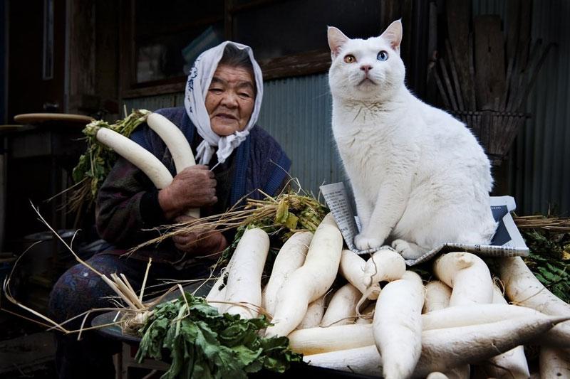 japonés abuela y su gato miyoko ihara (14)
