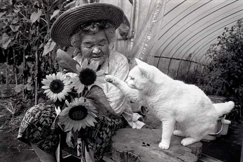 japonés abuela y su gato miyoko ihara (16)