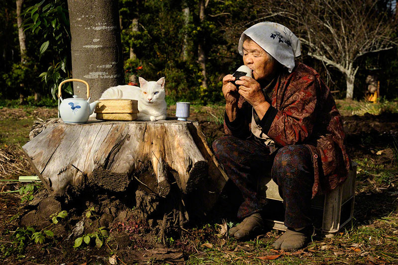 japonés abuela y su gato miyoko ihara (21)